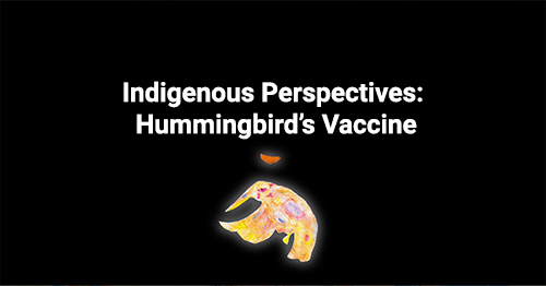 Indigenous Perspectives: Hummingbird's Vaccine